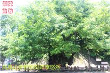 聚焦铜陵旅游业——凤凰山旁相思树畔享悠然