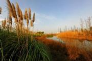 今年安徽再申报9处国家湿地公园 其中合肥有三处