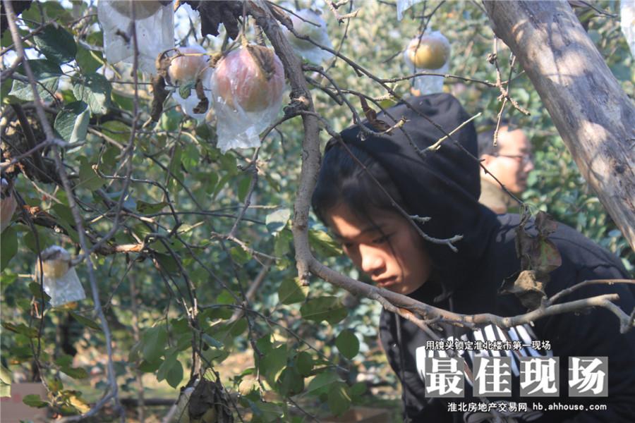 华松蘭墅颐景回馈新客户 摘苹果活动圆满结束