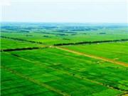 """""""十三五""""规划期间 六安市拟建高标准农田逾55万亩"""