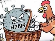 安徽省卫计委:H7N9疫情上升势头得到进一步遏制
