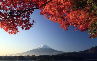新华社:日本房产中介运营何以规范有序?