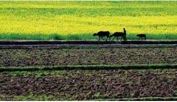 国土资源部督察组来安徽督察农村土地制度改革试点