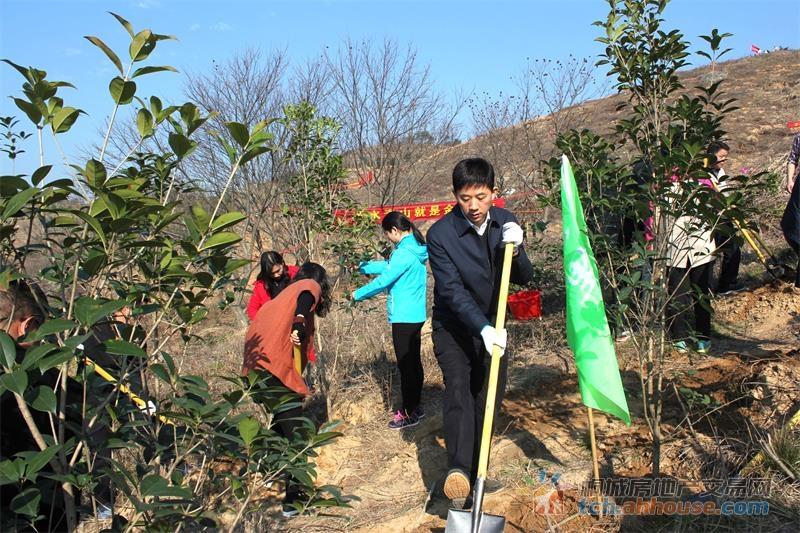 桐城市春季义务植树活动