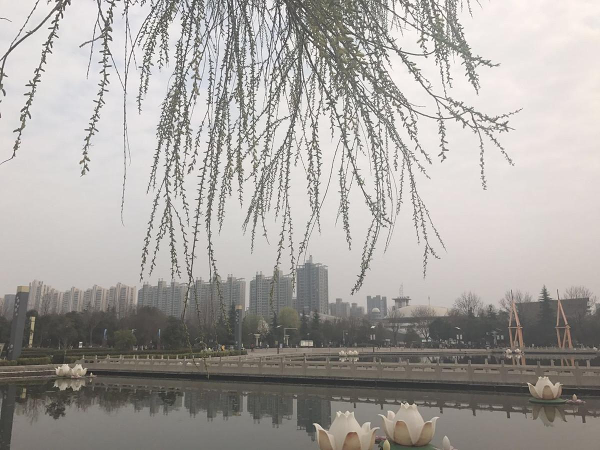 满园春色关不住 淮北三月赏花正当时!