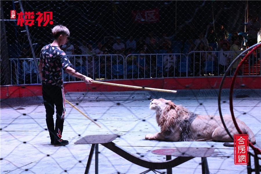 【恒大阳光半岛】皇家国际大马戏震撼落幕