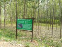 """宜秀区三级林长体系全面建成 生态林区有了""""家长"""""""