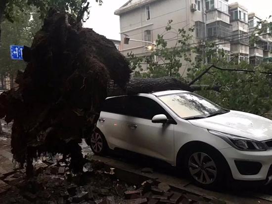 暴雨袭城|今天合肥多处大树被连根拔起!汽车被压!