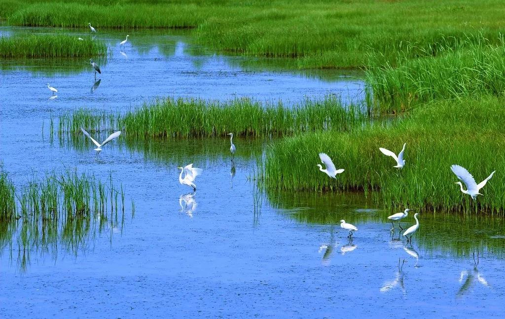 在东湖湿地之心,与世界湿地豪宅共品位