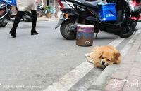 芜湖一个家庭将限养一只宠物狗 明确不允许寄养